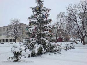 Прекрасна елха в центъра