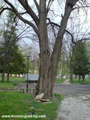Изглед от стария парк през пролетта