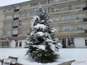 Зимна елха отрупана с сняг