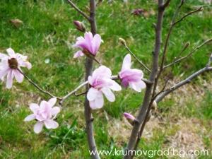 Крумовград 2013 пролет