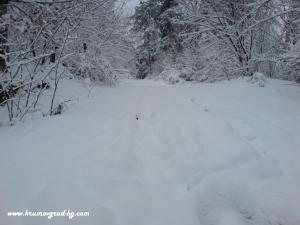 Крумовград зима 10