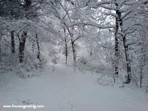 Крумовград зима 11
