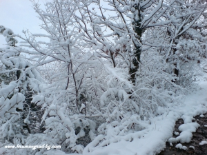 Крумовград зима 15