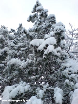 Зимна елха в крумовград
