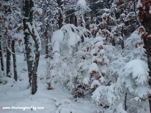 Крумовград зима 23