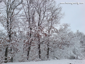 Зима в крумовград 37